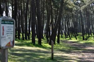 La forêt de la Faute-sur-mer